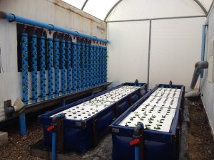 Aquaculture technology - Power Plastics and Deep Blue Aqua
